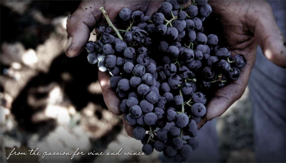An offering of freshly picked grapes